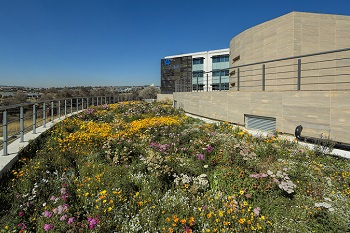 Going green: the rise of living roofs